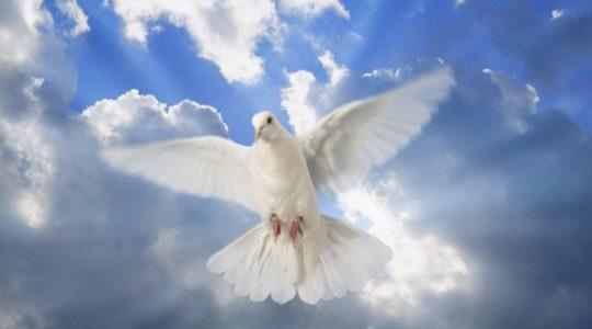 14.05.2016 Czuwanie modlitewne przed uroczystością  Zesłania Ducha Św.